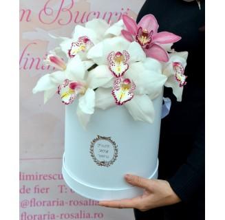 Cutie cu orhidee cymbidium