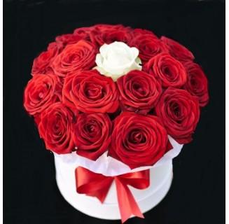 Cutie 18+1 trandafiri